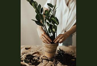 una donna fa giardinaggio per relax